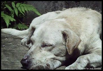 sleepless van damme by lonelyghost