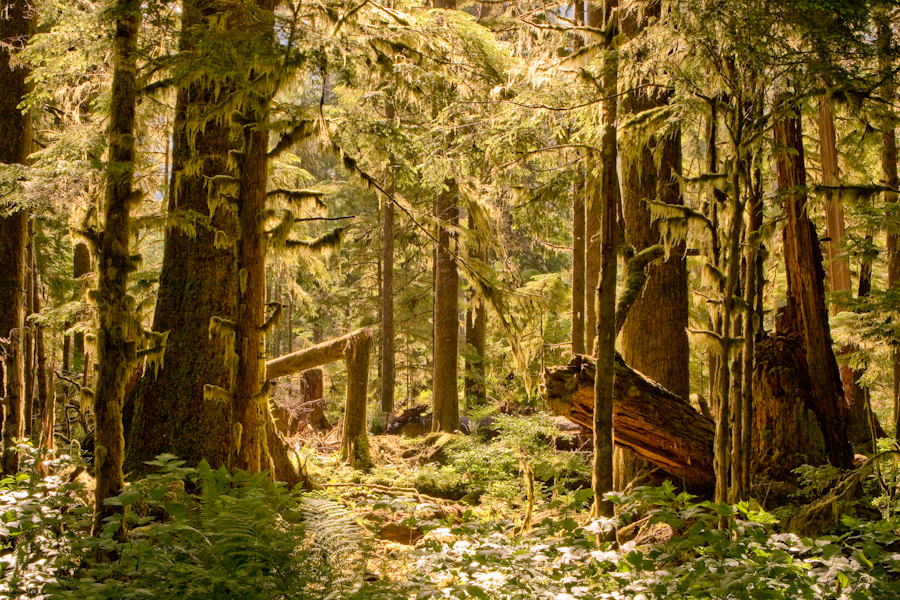 It is a photo of Universal Temperate Rainforest Drawing Model