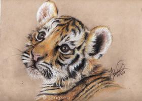 Tigre by adrigrcia