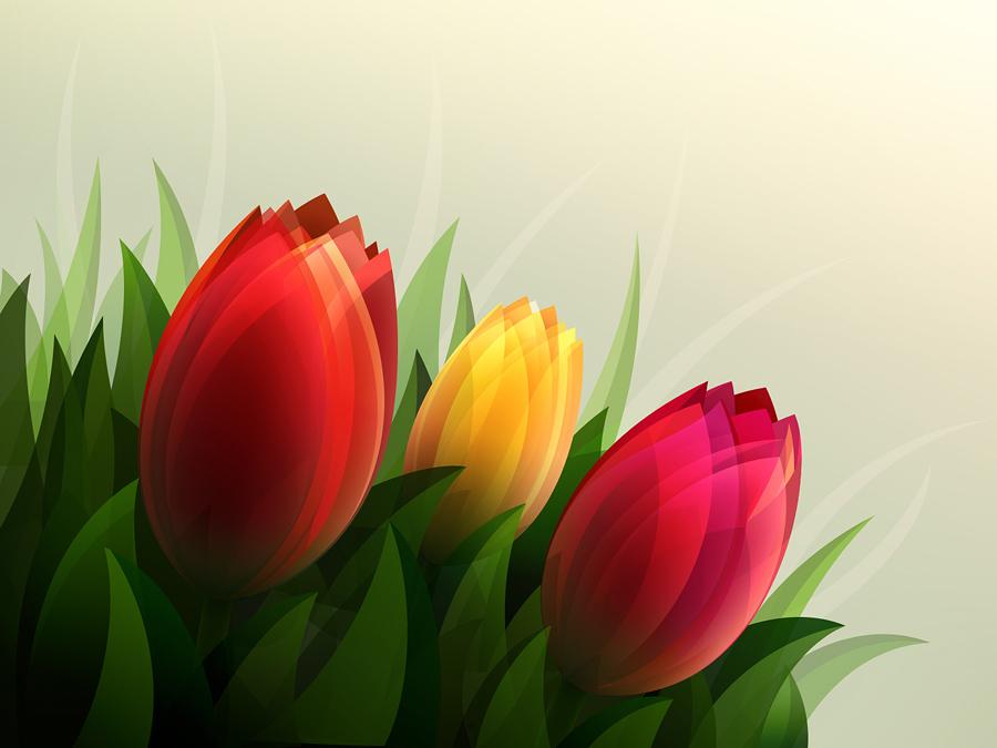 Tulips by IvanVashchenko