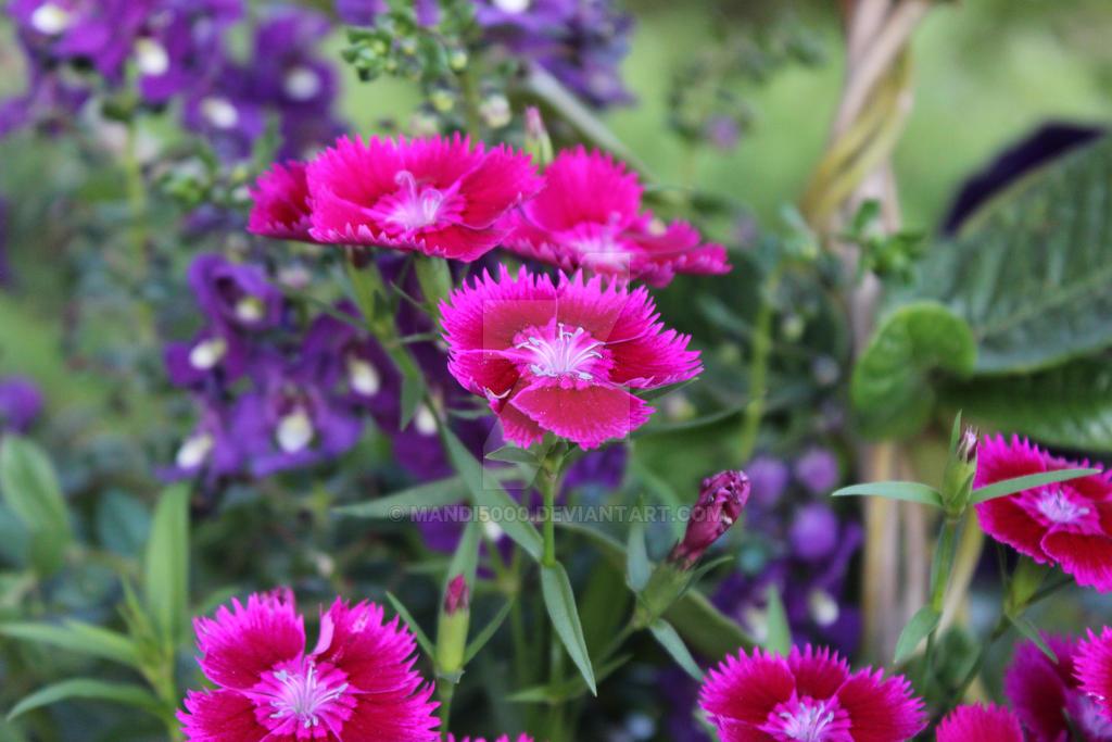 Pink Fuzzie by mandi5000