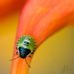 Bug by Mims1975b