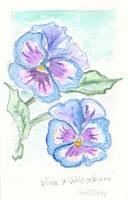 Witrock's violet by tadrala
