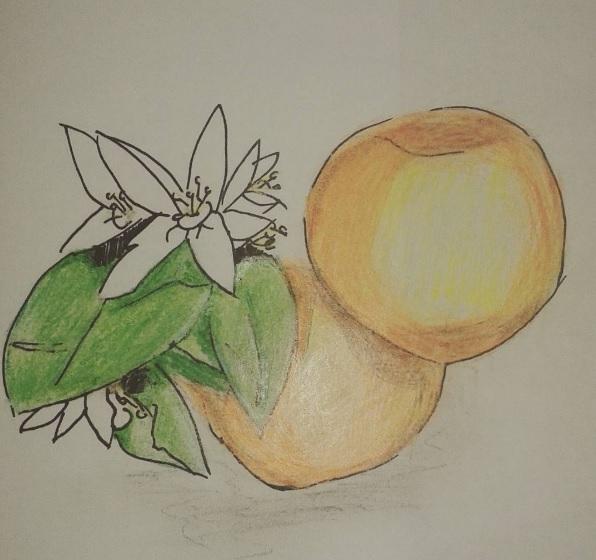 Orange by MargieAM