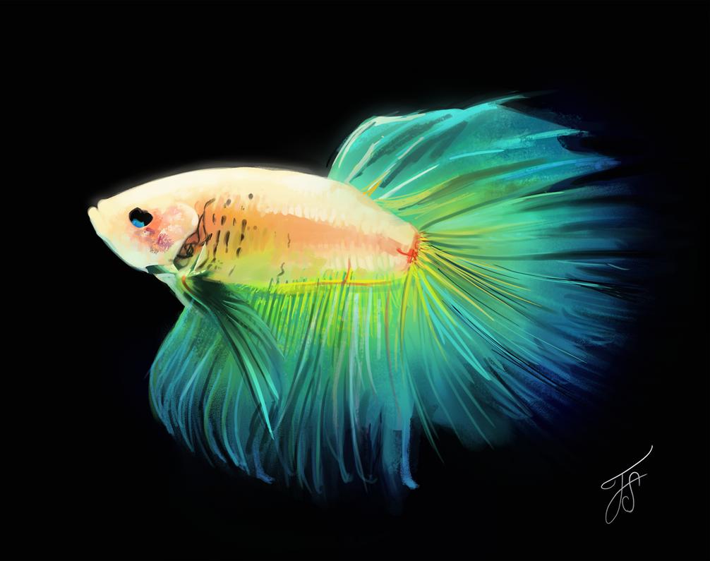 Betta Fish study by fluffySlipper on DeviantArt
