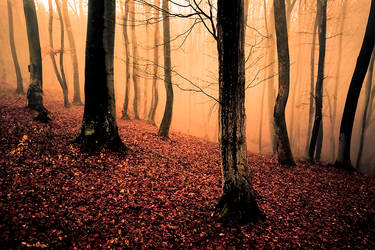 Golden Forest by sagefille20