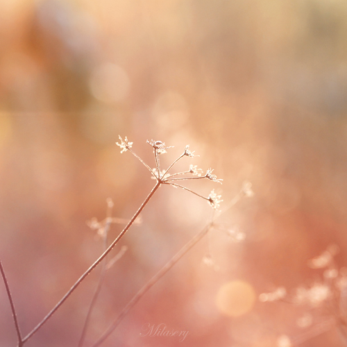 Sunlight dream by Milasery