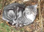 Tabitha the tabby cat 115