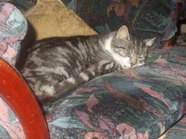 Tabitha the tabby cat 267 by FFDP-Neko