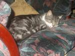 Tabitha the tabby cat 267