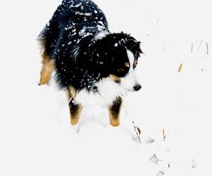 Snowy Kipper by 11sophie13