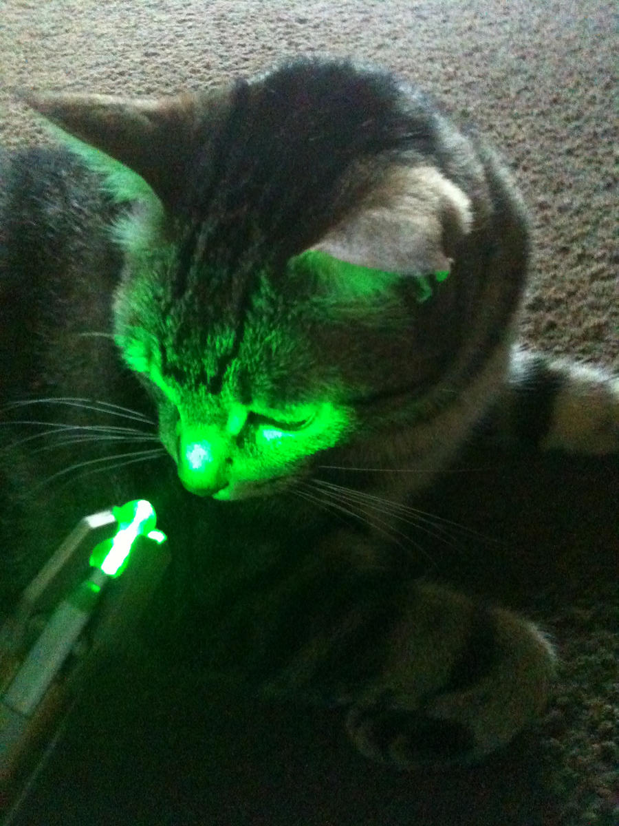 Milo Looking at My Sonic Screwdriver by CuryPotato