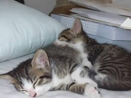 Miku and Miyu