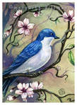 Tree Swallow w Blossoms ACEO