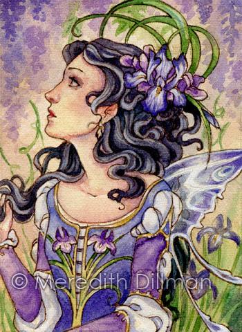 Wild Iris ACEO by MeredithDillman
