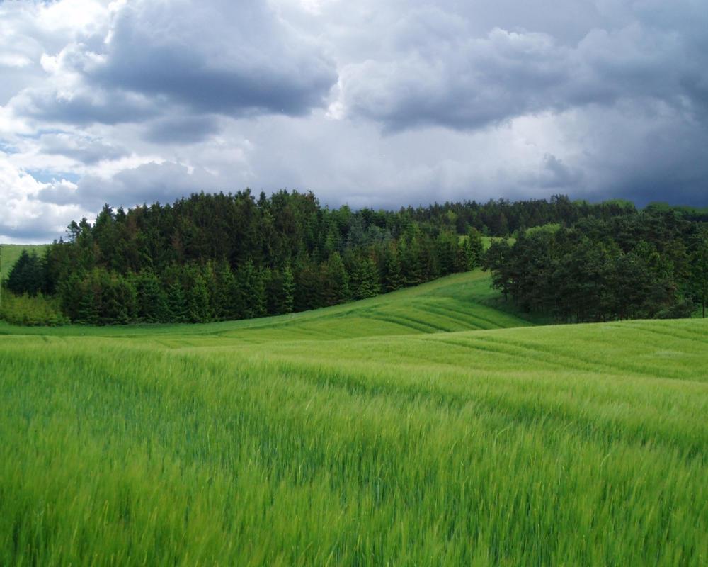 Green Fields by jestersmurf
