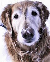 Snow Dog by ISeeMyWorldInACamera
