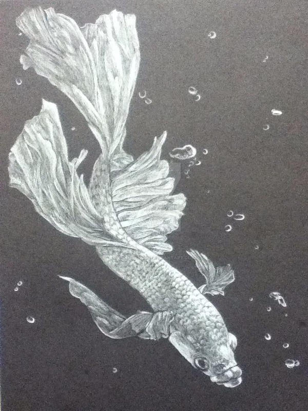 Betta Fish on Black Paper by PeddyPenguin