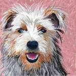Yorkshire terrier dog portrait
