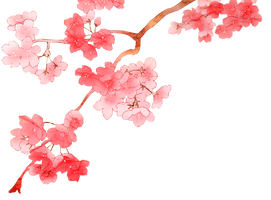 Cherry Blossom PNG 2 by dothenyancat
