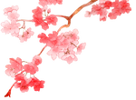 Cherry Blossom PNG 2