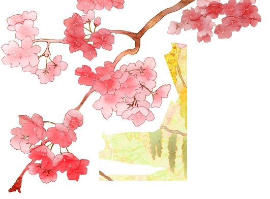 Busqueda de rol! Cherry_blossom_png_2_by_dothenyancat-d8p27j1