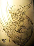 Wolverine the immortal