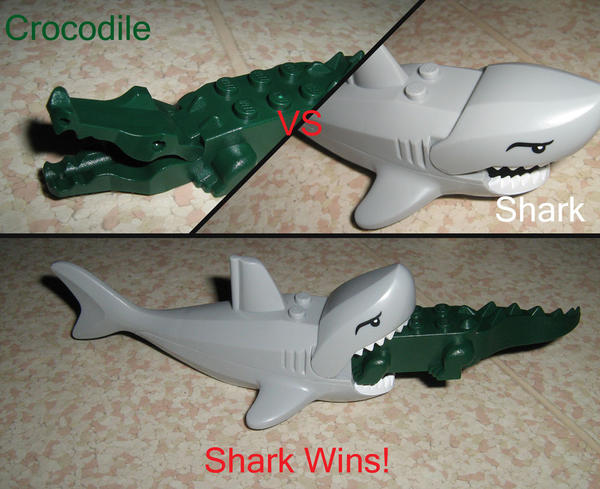 What Would Win A Shark Or A Crocodile