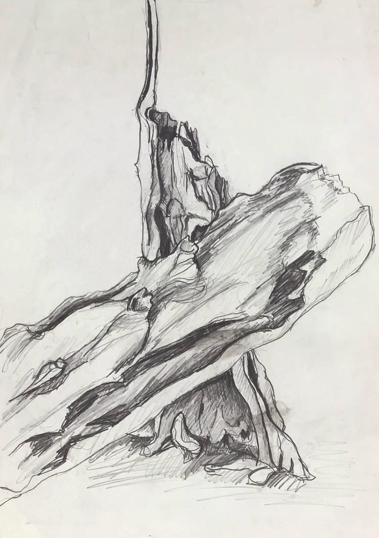 Tree Drawing by littlestudio