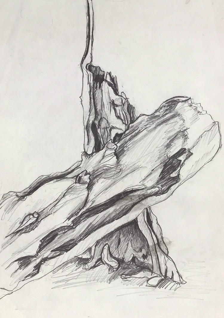 Tree Drawing by littlestudio