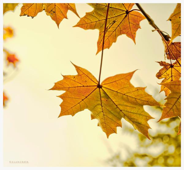 Golden Autumn by elanordh