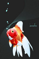 red fish by jshinse