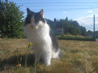 buddy sitting on grass by RussellMGoodwin