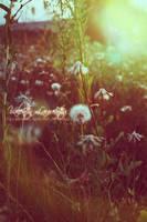 Hight light dandelion by wollie13