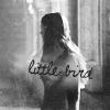 Little Bird by daretoswim7709