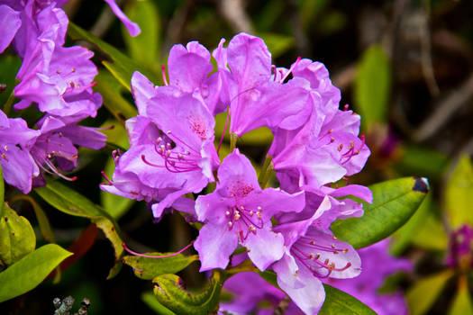 being violet
