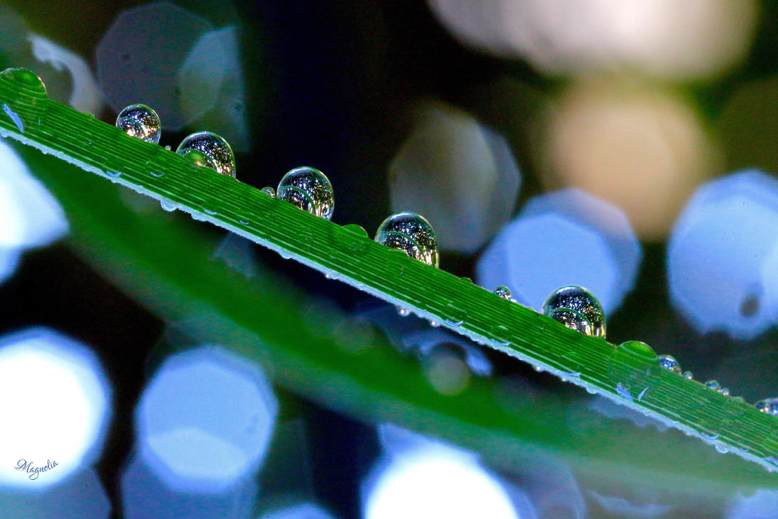 Drops and Bokeh by FallOut99
