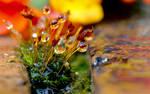 Magical Moss