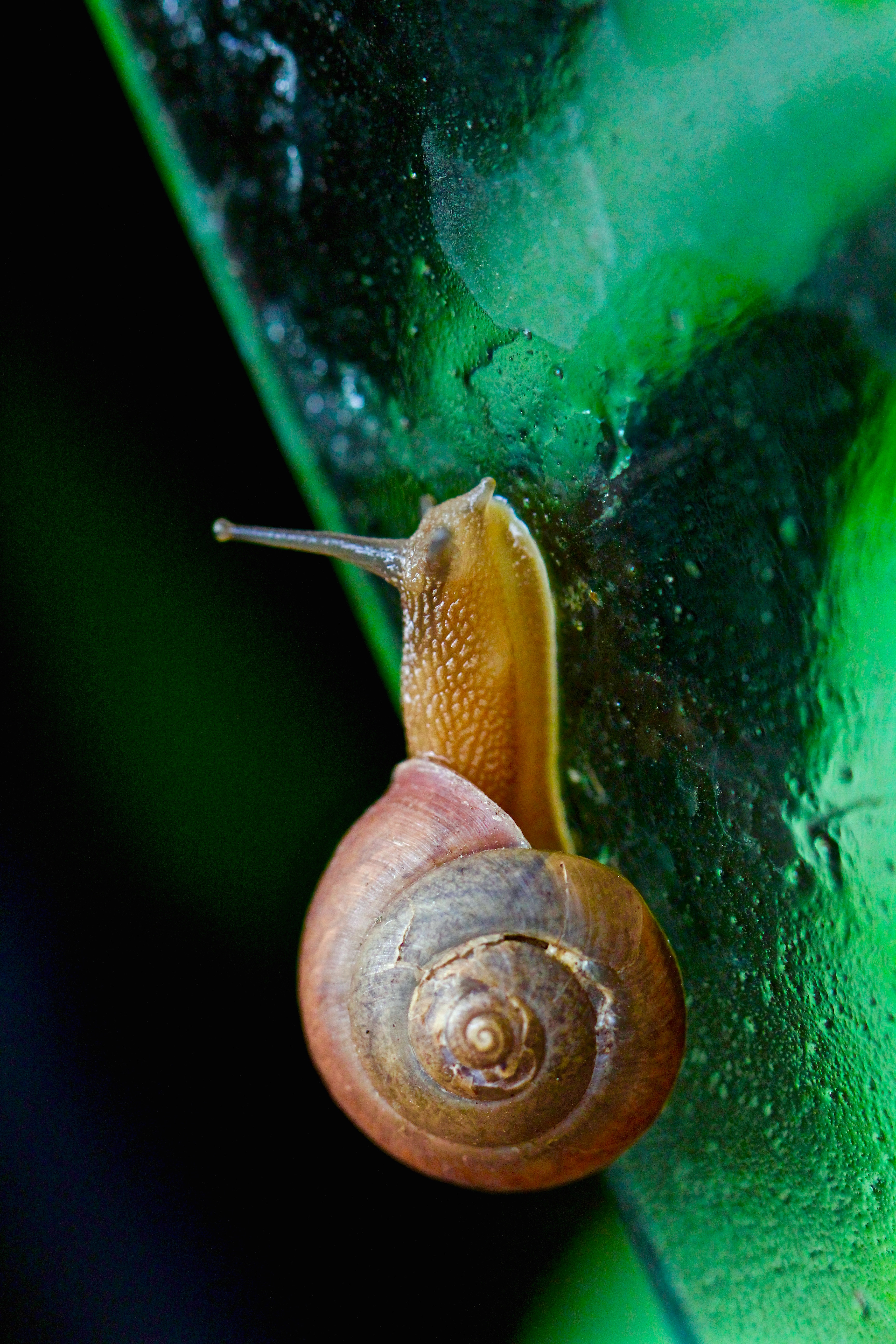 Images of Common Garden Pests, Bugs and Natural Remedy Solutions