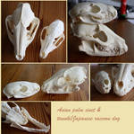 two skulls for sale