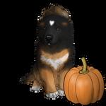 October - Toby