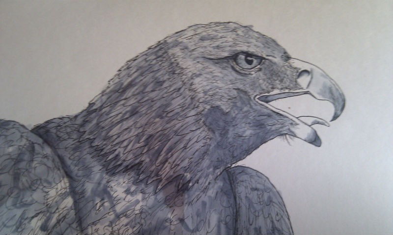 screaming_eagle_by_generalmelchett-d7rtp