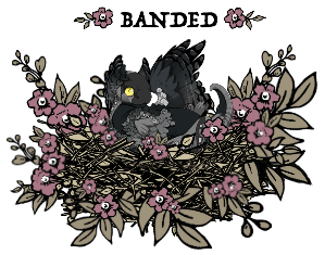 bandedowlet_by_myserpentine-d9gn09i.png