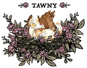 tawnyowlet_by_myserpentine-d9gn0b0.png