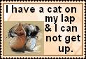 Cat on lap by JediSenshi