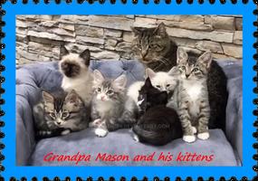 GrandPa Mason and his kittens