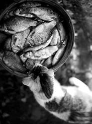 cat - the fisher by jivotnoe