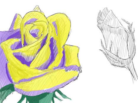 Day 003 Rose