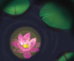 Day 007 Night Lotus