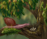 Hawaiian bird-eating snail